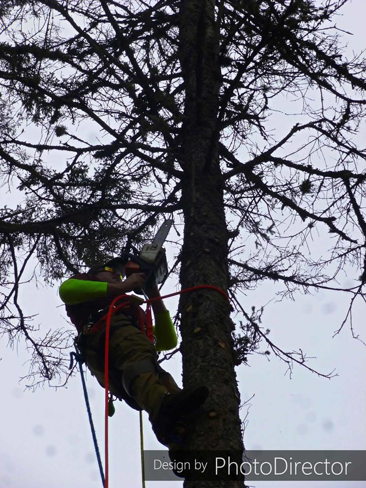 Joe's Tree Service image 4