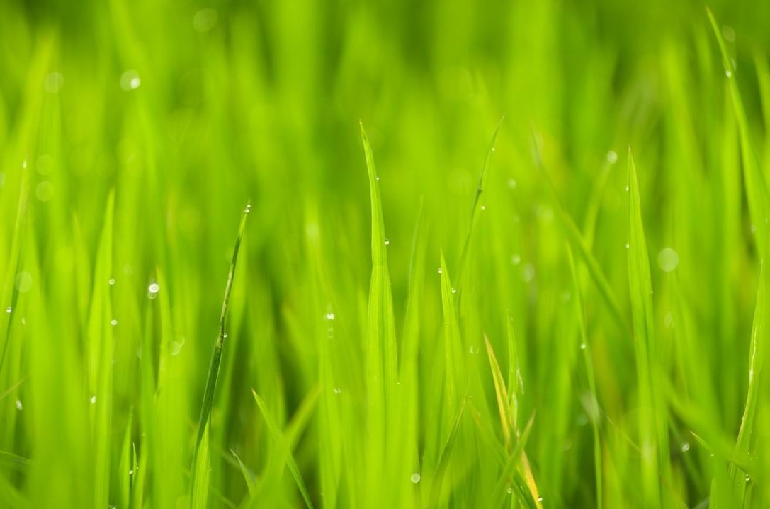 Terra Fur-muh Landscape Management, LLC image 1