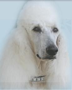 Kind Hearted Pet Resort image 1
