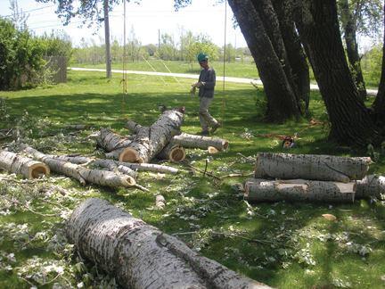 Rivas Tree Service image 8