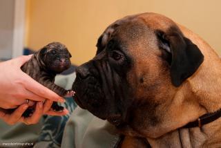 Kliniek voor Gezelschapsdieren