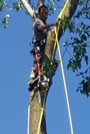 Coffman's Tree Service image 31