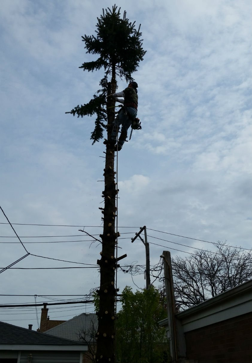 AJAX Tree Service image 7