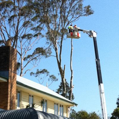 T & M Tree Service image 1