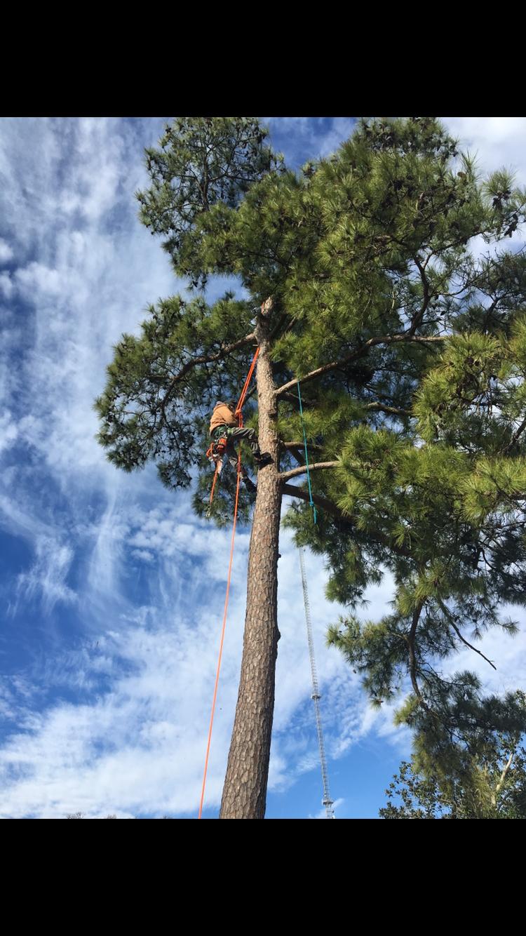 Mudge Tree Service image 1