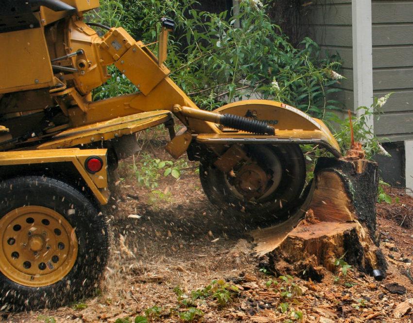 Tree Cutters LLC image 5