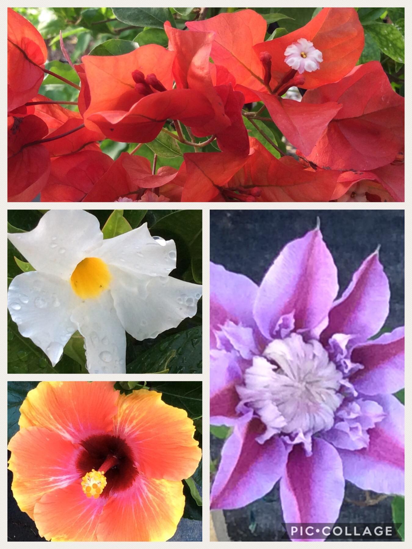 Paradise Plantscapes Inc image 2