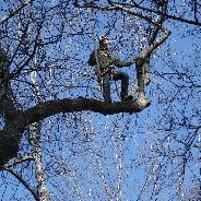 Heindl Tree Care