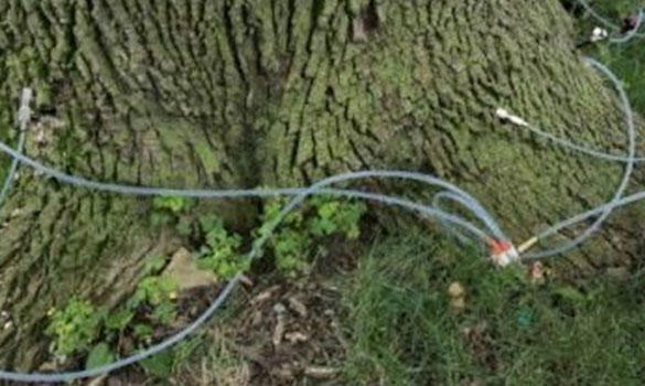 Arbor Master image 3
