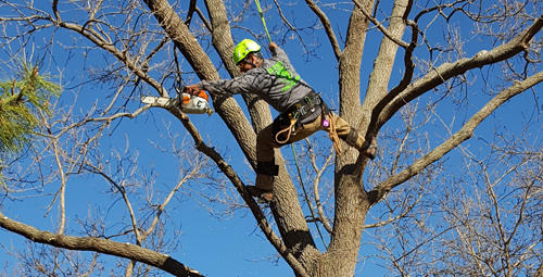 Complete Tree Care & Landscaping image 1