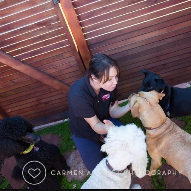 Fetch! Pet Care image 20