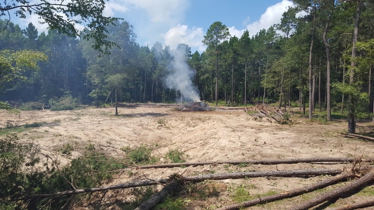Texas Ace Land Clearing   Land Clearing Houston image 16