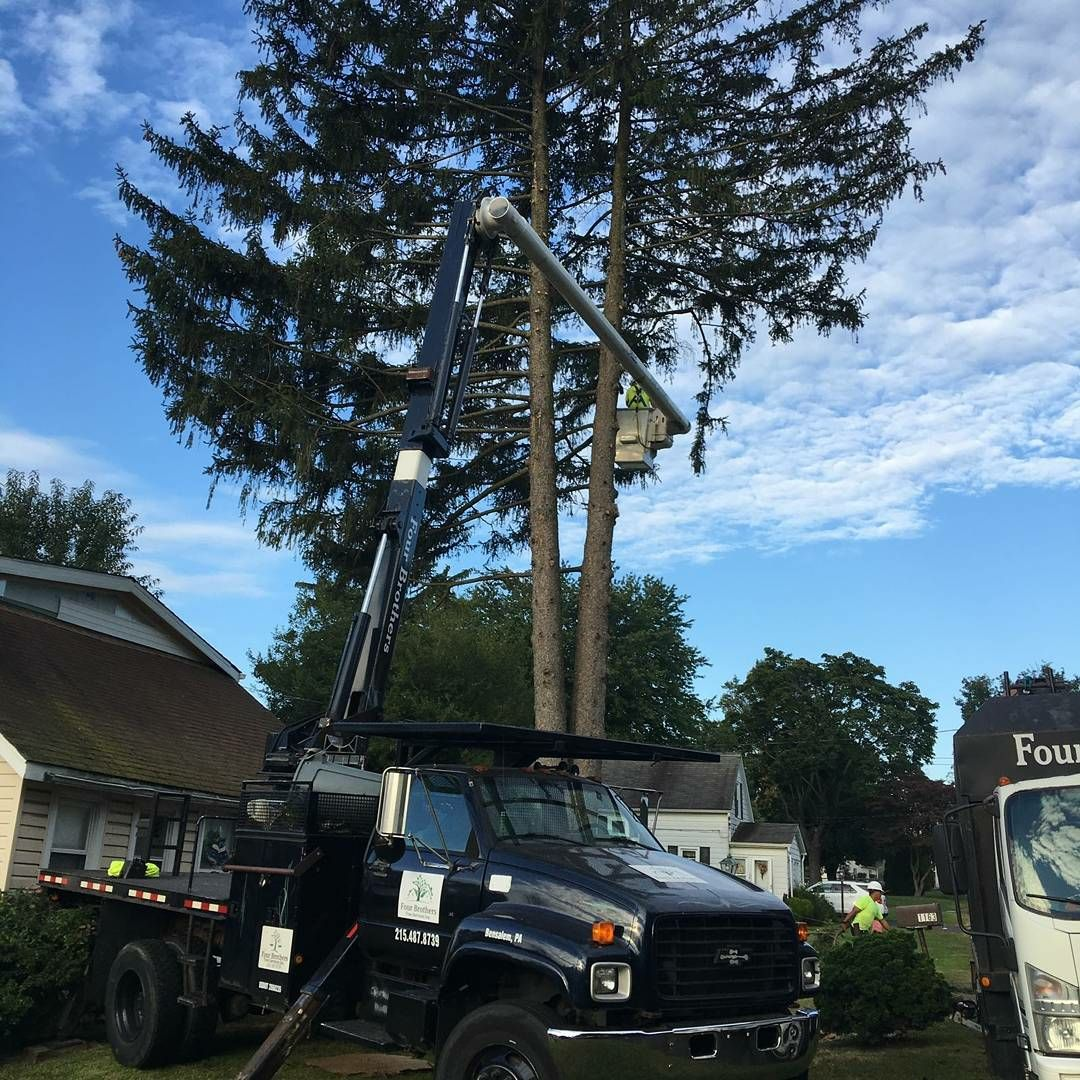 Four Brothers Tree Service Inc. image 40