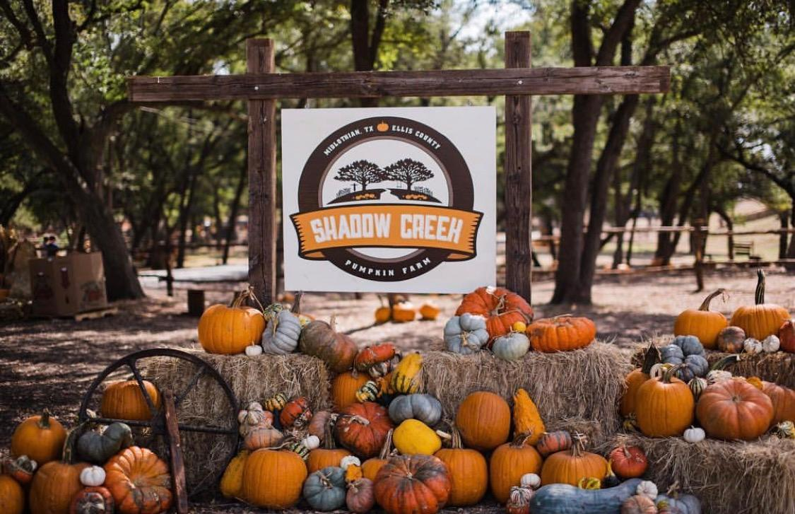 Shadow Creek Pumpkin Farm image 0