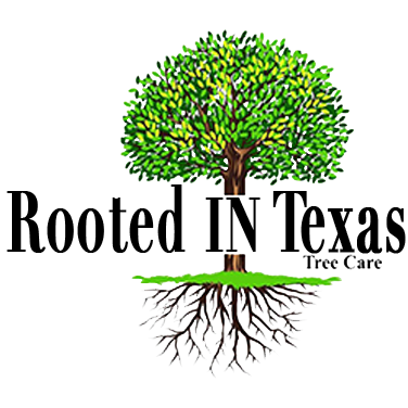 Rooted in Texas Tree Care