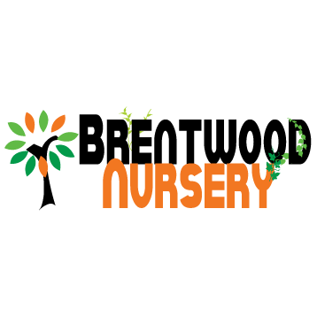 Brentwood Nursery Three