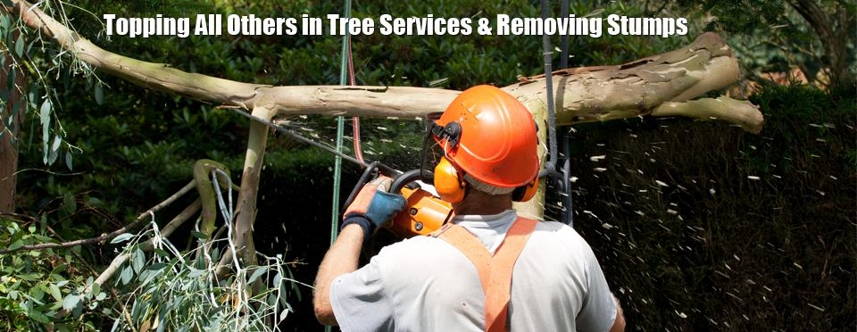 Kottman's Tree Services image 0