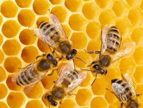 Biz-zz Bee Farms Pest Control image 2