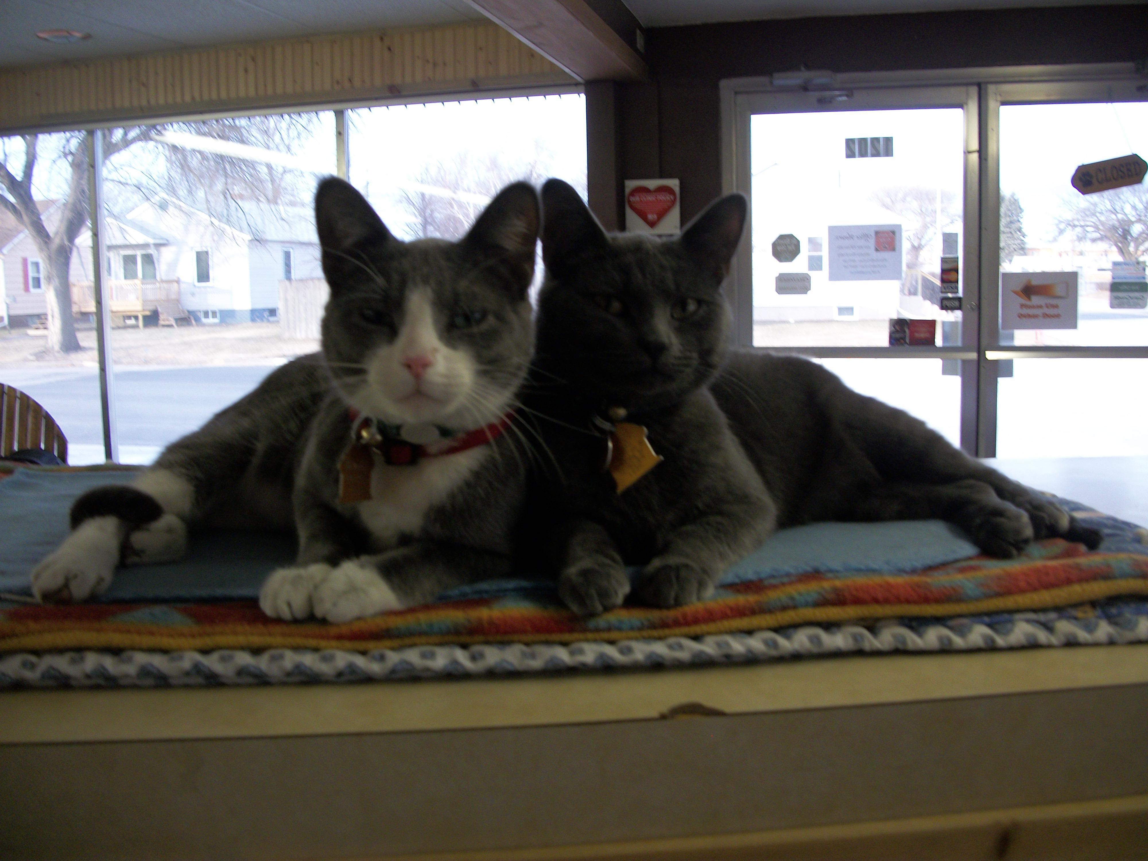 Dr. Dawn's Pet Stop LLC image 4