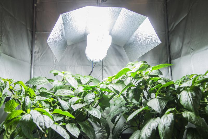 Garden west grow shop vivai piante articoli da for Articoli da giardino milano
