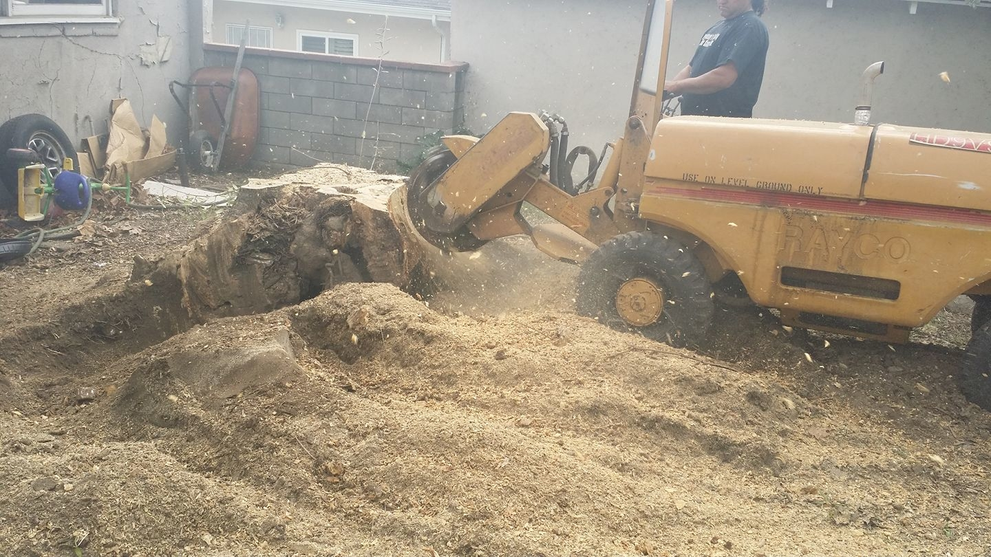 Stump grinders are used to remove the stump and roots of trees.
