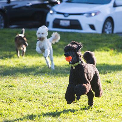Fetch! Pet Care image 13