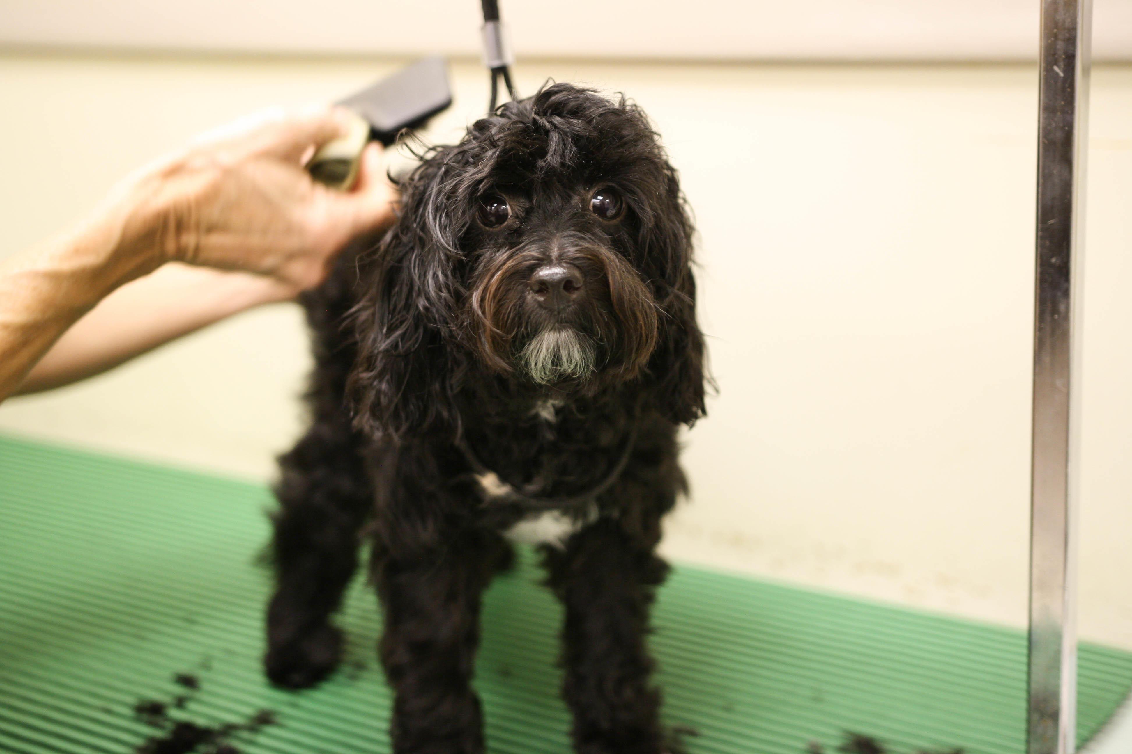 Oakhurst Veterinary Hospital image 13