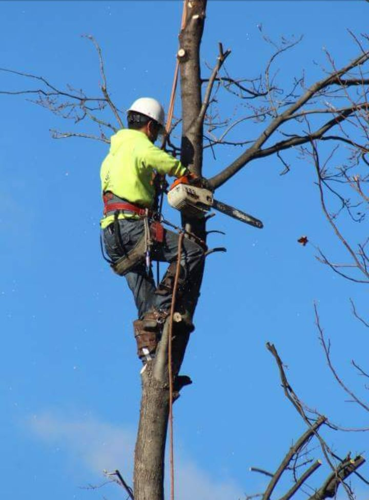 Four Brothers Tree Service Inc. image 10