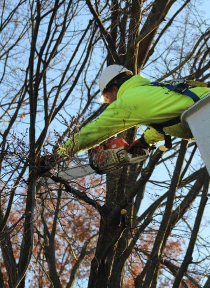 Four Brothers Tree Service Inc. image 14