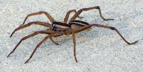 NC Pest Control image 4