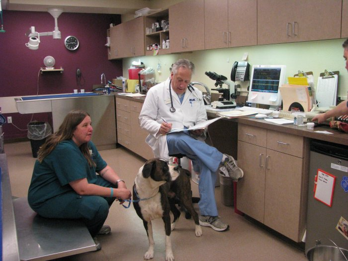 VCA McCormick Ranch Animal Hospital and Pet Care Center image 3