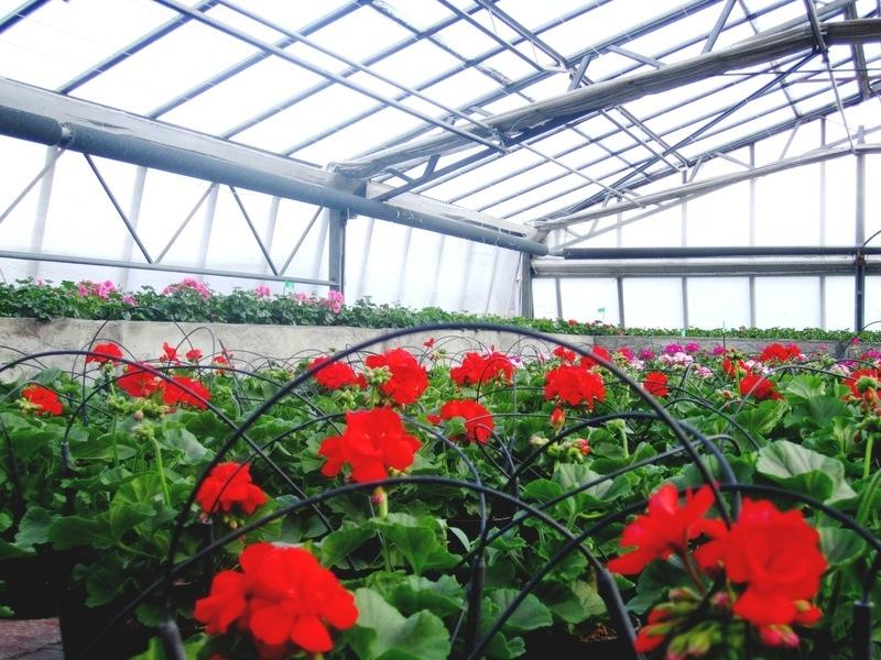 Rosso Floricoltura - Azienda Florovivaistica - Vivai, Piante, Articoli ...
