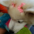 Clip N' Dip Pet Grooming image 7
