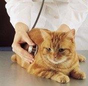 Allen Veterinary Hospital image 0