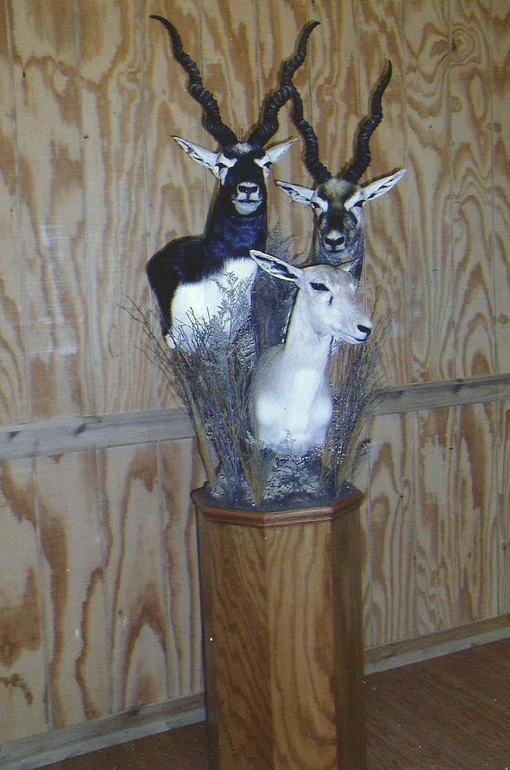 Buck's Taxidermy image 3