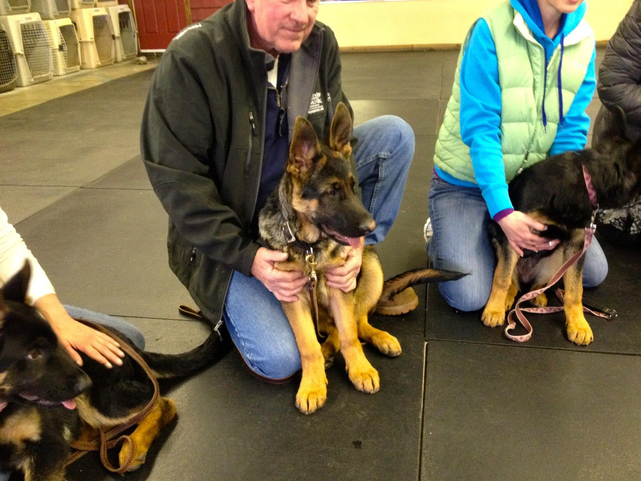 Granite State Dog Training Center image 0