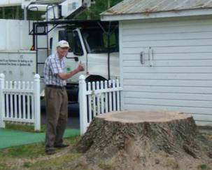 Jeff's Tree Service image 0