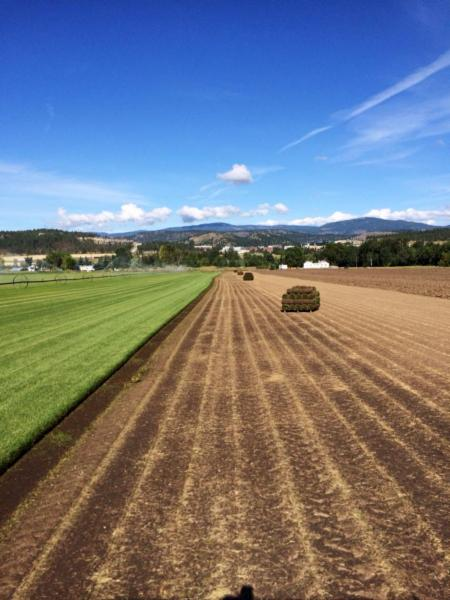 Macdonnell Turf Farms