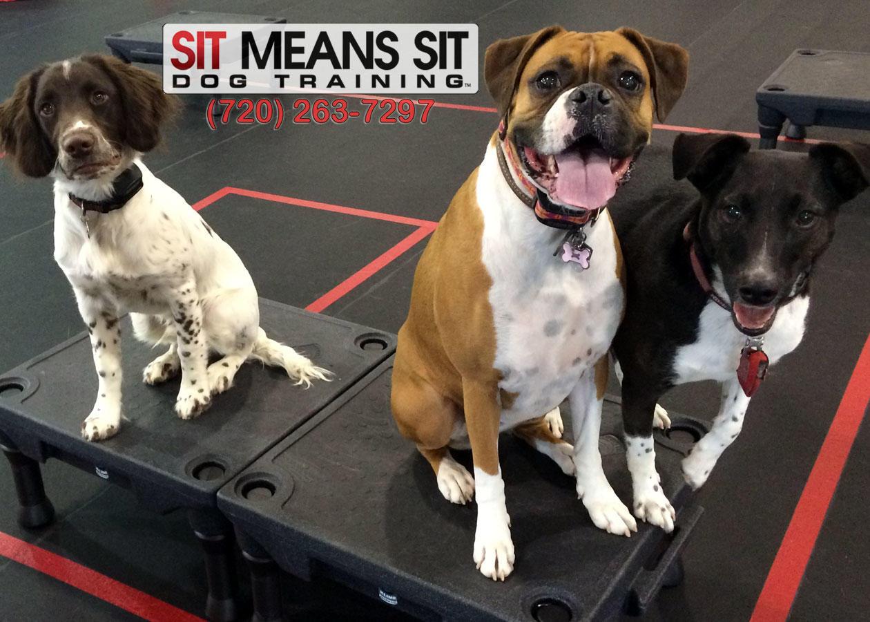 Sit Means Sit Longmont-Firestone image 1