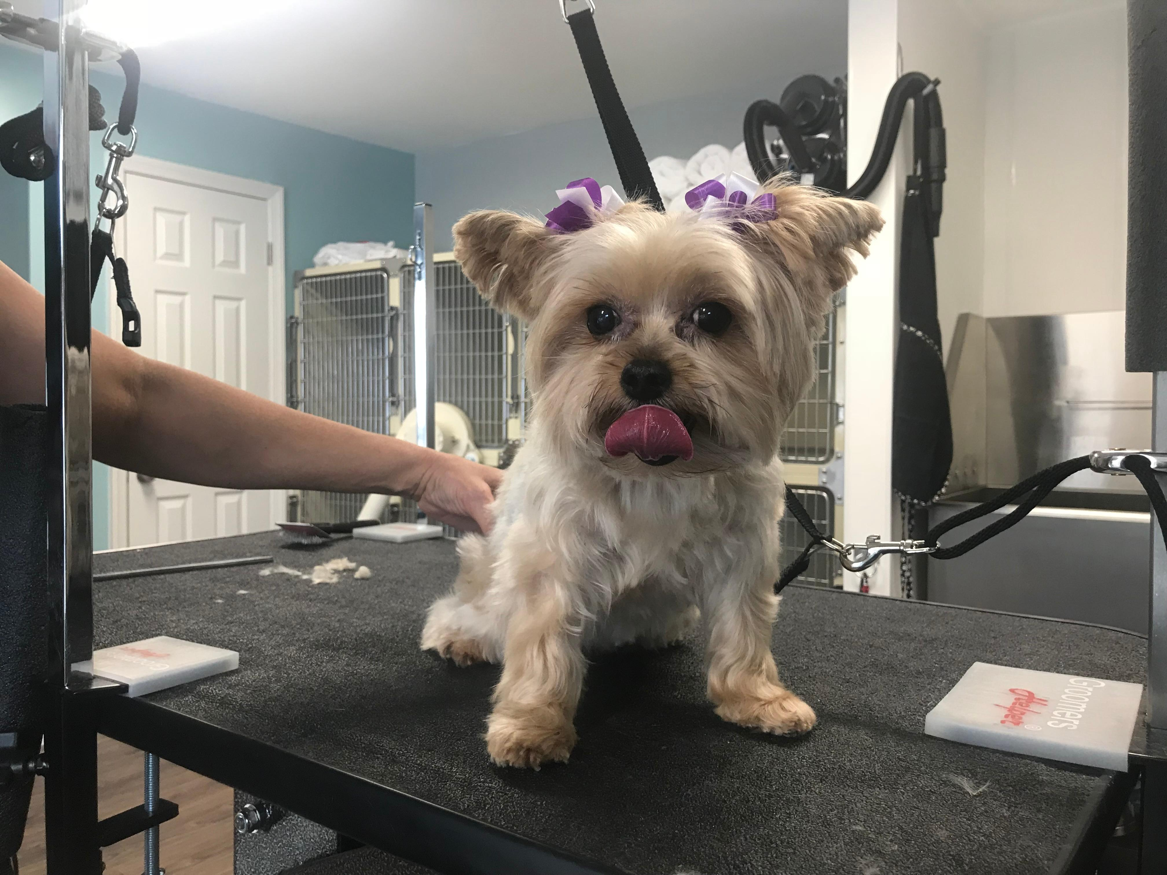 The Room & Groom, Pet Spa & Services image 26