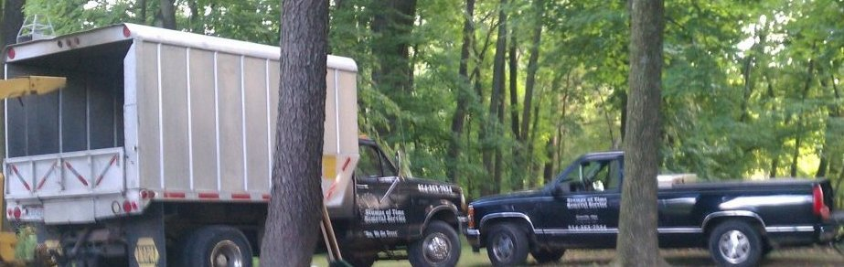 Stumps Of Time Removal Service image 3