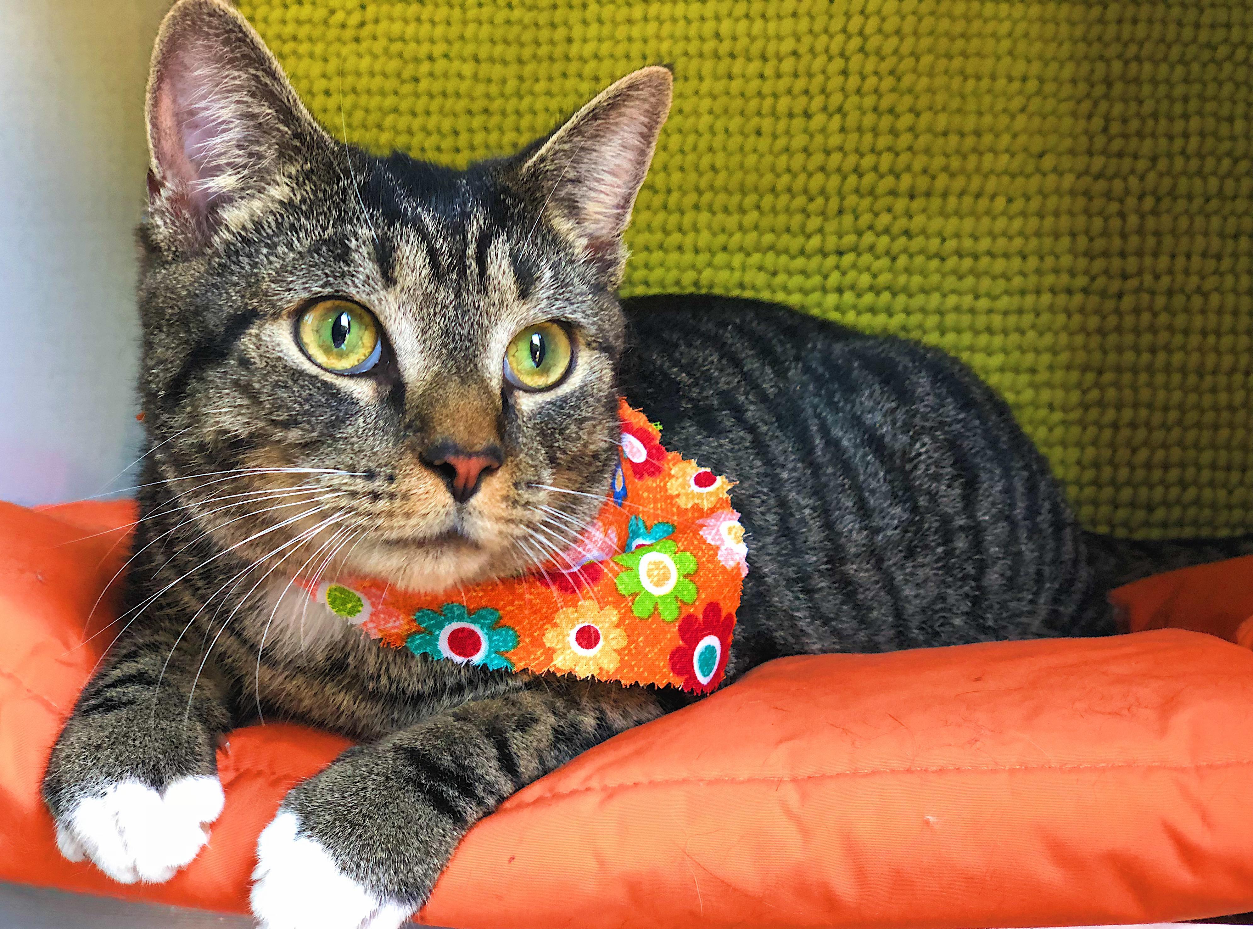 Lowcountry Feline Spa image 3