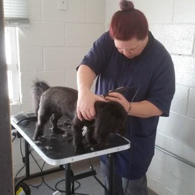 Image 5 | Rub My Belly Dog Care