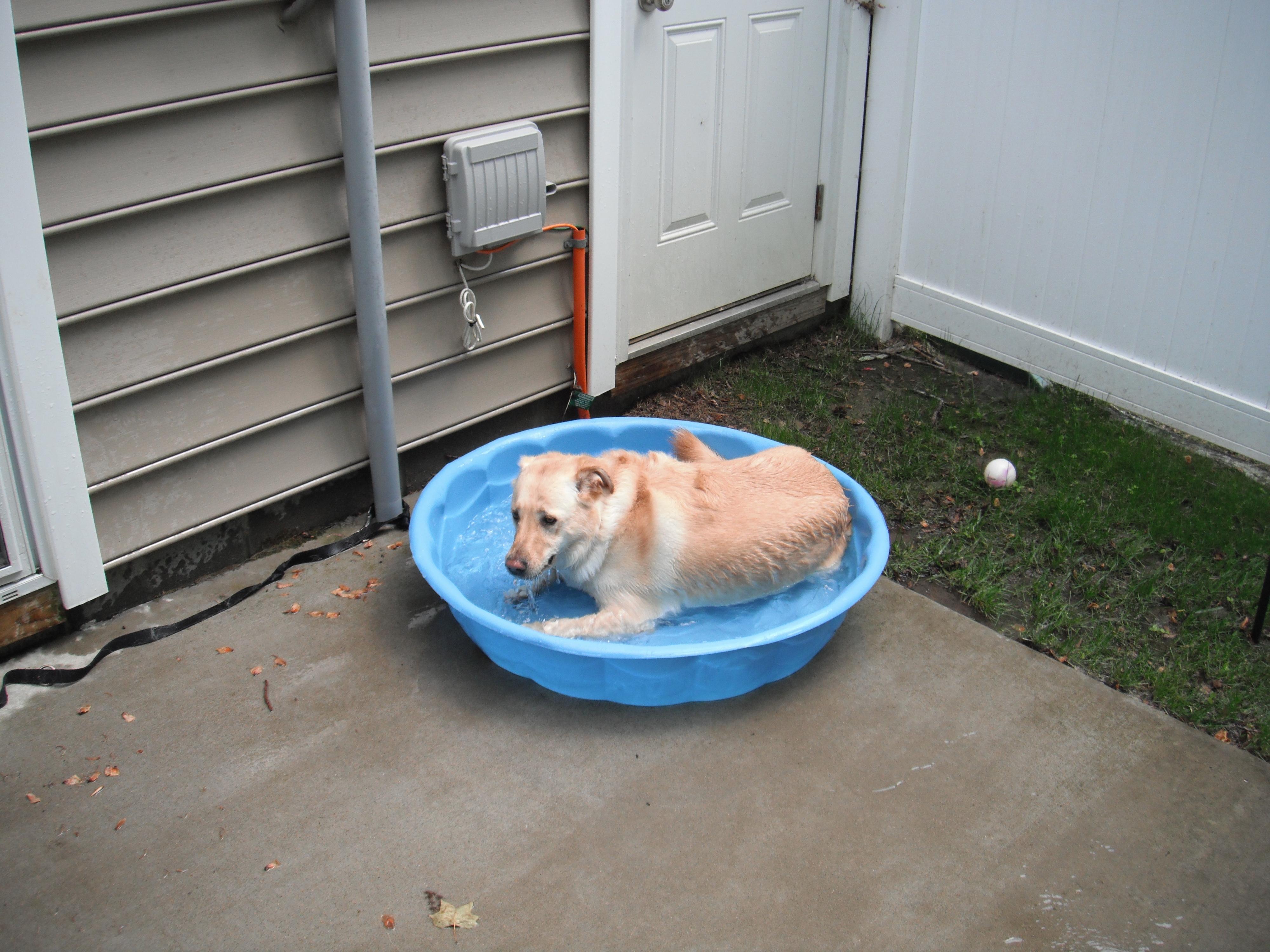 Fetch! Pet Care of Manassas image 4