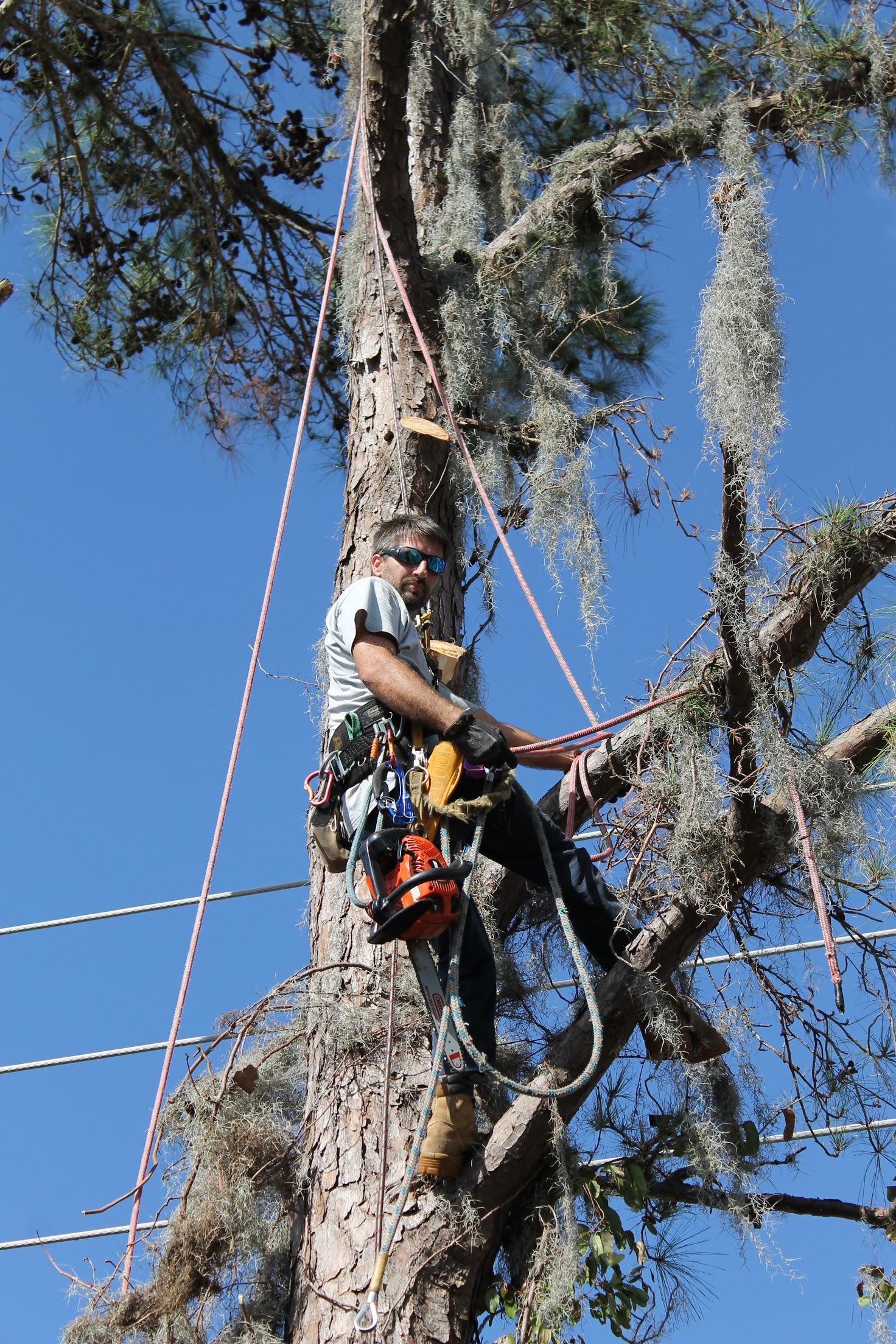 Karney Tree Service image 14