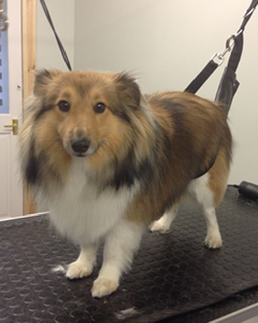 Alpha Dogs Professional Dog Grooming