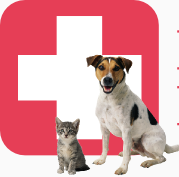 East Valley Emergency Pet Clinic