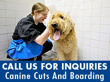 Canine Cuts And Boarding image 0