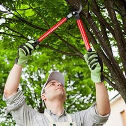 Alpine Tree Service image 3