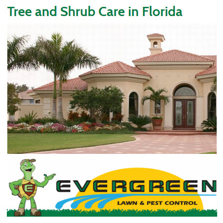Evergreen Lawn & Pest Control image 3